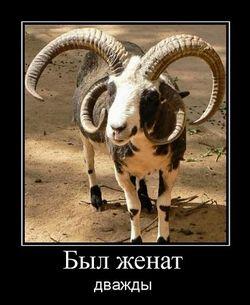 был женат, козел с четырьмя рогами
