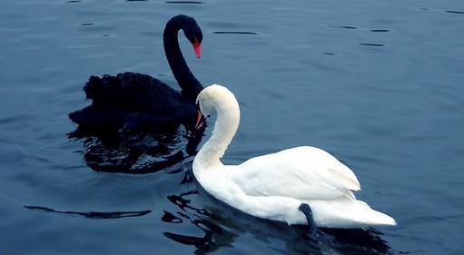 приворот черный и белый